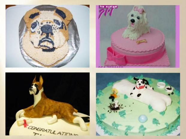 collection of dog cakes